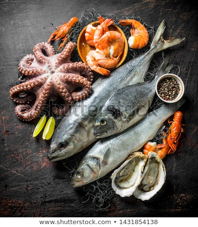 assorted fish and crustacean Stock photo © M-studio