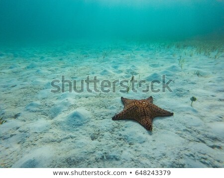 Oranje vis zee illustratie water groene Stockfoto © bluering