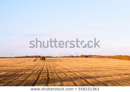 újonnan vág ősz búzamező falu Moldova Stock fotó © frimufilms