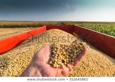 Szójabab kezek női gazda mezőgazdaság egészséges Stock fotó © stevanovicigor