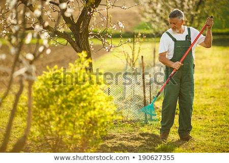 Portret mężczyzna ogrodnik szpadel kwiat wzrosła Zdjęcia stock © IS2