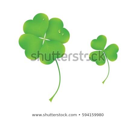 Szett zöld shamrock lóhere levél harmat Stock fotó © orensila