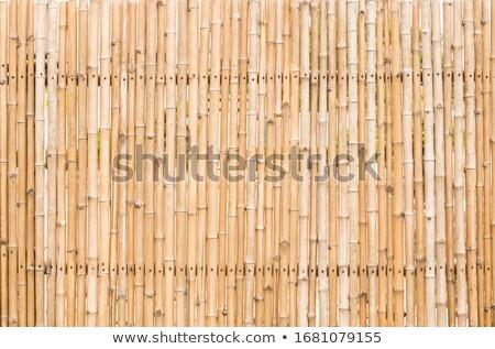 bamboo reeds stock photo © italianestro