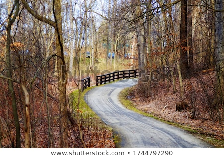 Beautiful country road Stock photo © joyr