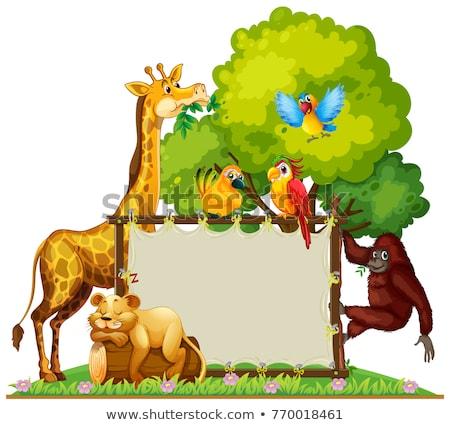 野生動物 周りに 実例 背景 猿 ストックフォト © colematt
