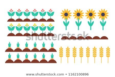 庭園 ベッド 茂み ヒマワリ ベクトル セット ストックフォト © robuart