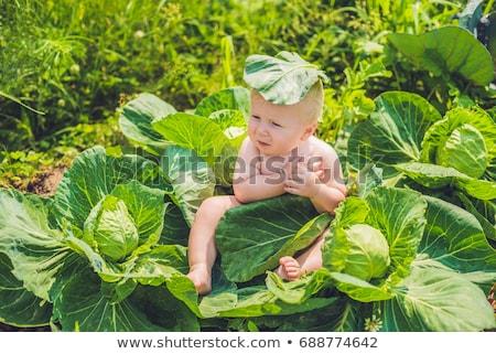 Stock foto: Baby · Sitzung · Kohl · Kinder · Kind · Blatt