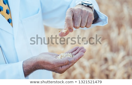 Scientist researching new types of grain, crops and plants Stock photo © Kzenon