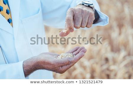 bilim · adamı · alan · test · yeni · tahıl - stok fotoğraf © kzenon