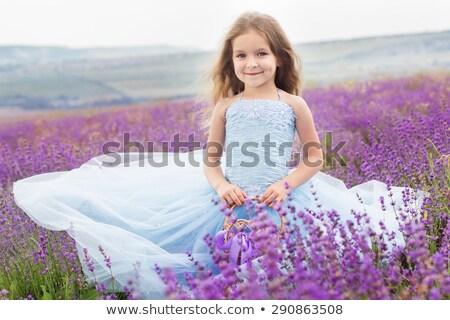 primavera · campo · de · lavanda · planalto · França · paisagem · viajar - foto stock © elenabatkova