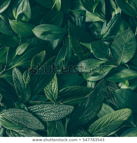 Closeup nature view of green plant in garden. Natural green plants for background, texture, wallpape Stock photo © galitskaya
