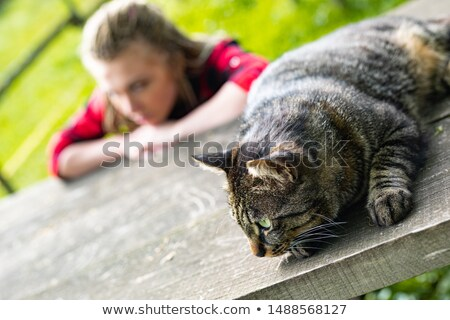 Close up on alert cat lying atop wood table stock photo © Giulio_Fornasar