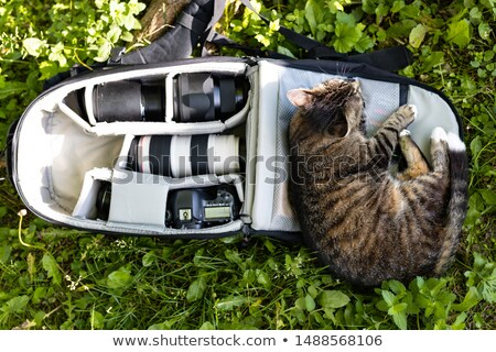 Cute cat lying down in bag containing camera Stock photo © Giulio_Fornasar