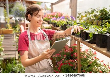 Genç kadın touchpad ayakta yeşil fidan Stok fotoğraf © pressmaster