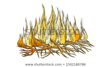Geleneksel yanan kamp ateşi renk vektör yakacak odun Stok fotoğraf © pikepicture