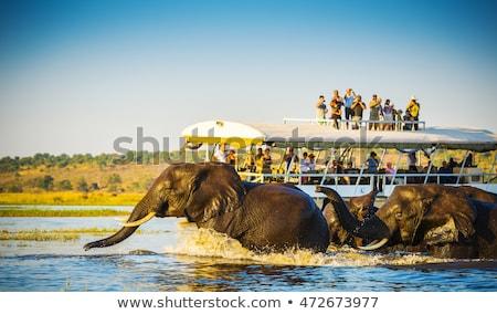 Chobe river landscape, Botswana Africa Stock photo © artush