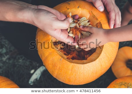 a close up of womans and child hands pulls seeds and fibrous material from a pumpkin before carving stock photo © illia