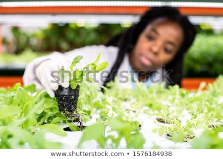 Young researcher of Asian ethnicity holding small pot with green seedling Stock photo © pressmaster