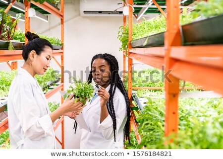 Young African agronomist pointing at green seedlings held by her Asian colleague Stock photo © pressmaster
