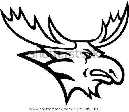Bull Moose or Elk Head Mascot Black and White Stock photo © patrimonio