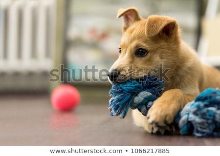 játszik · kutyakölyök · gyönyörű · fiatal · lány · szép · aranyos - stock fotó © iko