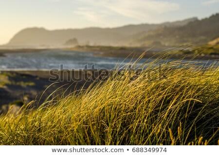 Zachte Oregon kust pijnboom mist wolk Stockfoto © bobkeenan