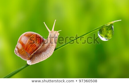 little snail on green leaf background stock photo © anna_om
