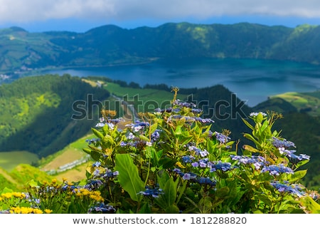 Flowering Tree and Volcanic Crater Stock photo © azamshah72