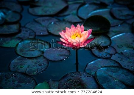 tropicali · giardino · botanico · dettagli · Thailandia · fiore · primavera - foto d'archivio © happydancing