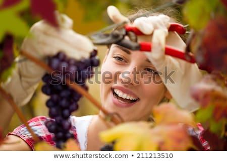 boldog · bor · fiatal · nő · tart · üveg · vörösbor - stock fotó © photography33