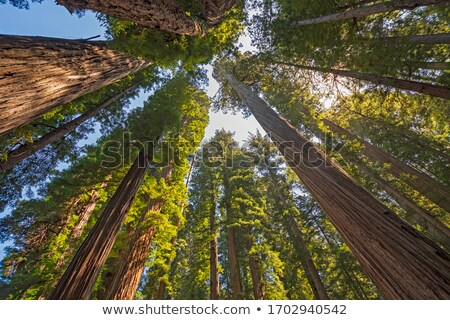Sahil park Kaliforniya orman ağaçlar Stok fotoğraf © wildnerdpix