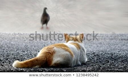 Rood · witte · dieren · dier · knop - stockfoto © defotoberg