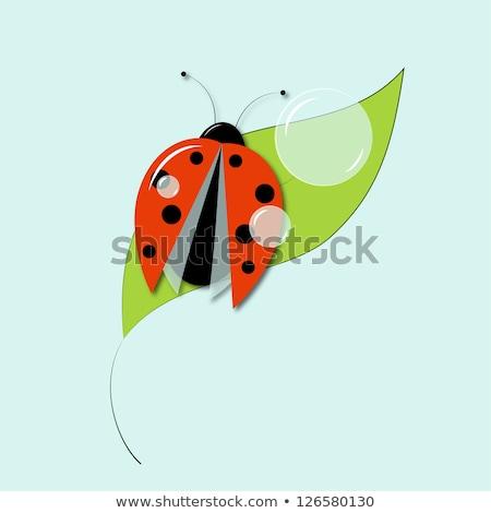 planta · pequeno · joaninha · ilustração · flor · primavera - foto stock © experimental