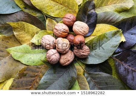 walnut tree in autumn Stock photo © taviphoto