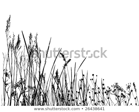 Vecteur de silhouette d'herbe réelle Photo stock © Taiga