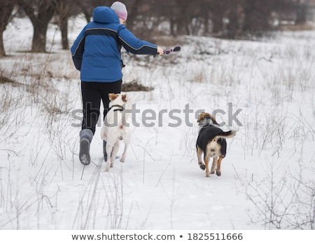 cute · mixto · raza · perro · retrato · oscuro - foto stock © eriklam
