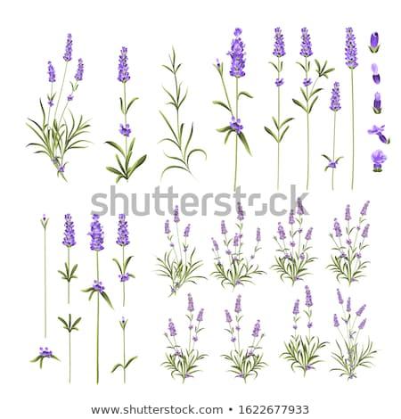 Flor elemento coleção abstrato natureza folha Foto stock © creative_stock