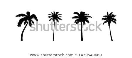 Kelime bulutu meyve cam çöl palmiye Stok fotoğraf © Refugeek