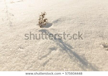 aszalt · ág · magányos · fa · hó · sivatag - stock fotó © lunamarina