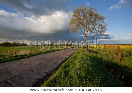 Utca nemi erőszak mező kék ég égbolt virág Stock fotó © meinzahn