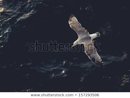 Seagull flying above water Stock photo © nessokv