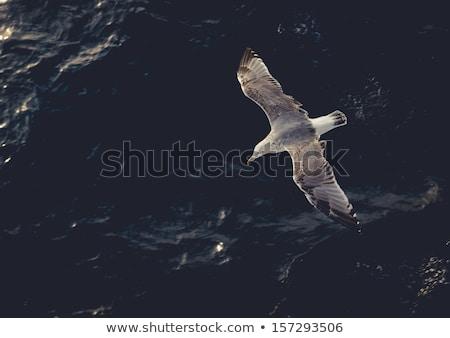 Foto stock: Gaivota · voador · acima · água · blue · sky · mar