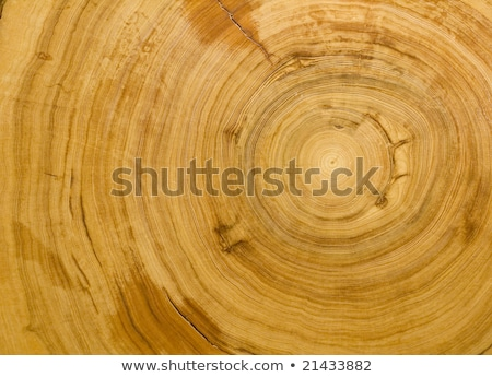 Detail of old Cypress tree trunk  Stock photo © AlessandroZocc