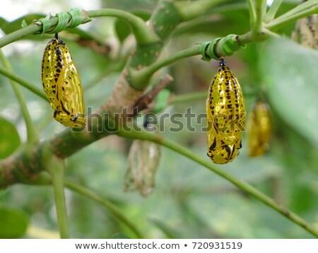 vlinder · uit · dier · mooie · insect · bug - stockfoto © amok