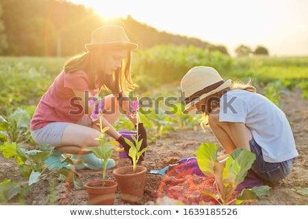 два красивой девочек цветы чувственный женщину Сток-фото © NeonShot