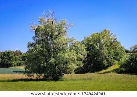 kolorowy · parku · dekoracje · summertime · kwiaty · krajobraz - zdjęcia stock © janpietruszka