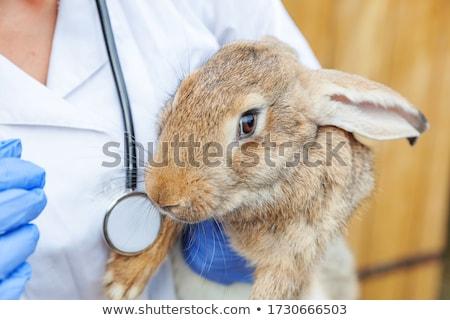 Vet closely examining a rabbit Stock photo © wavebreak_media