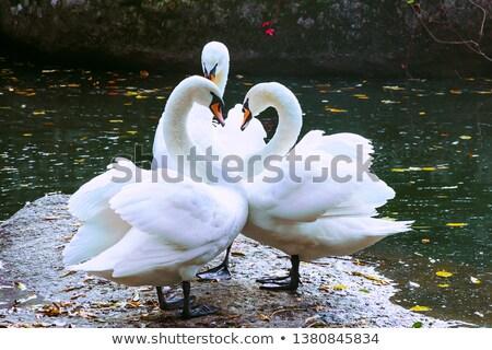 Három folyó jelenet élet szeretet természet Stock fotó © MilanMarkovic78