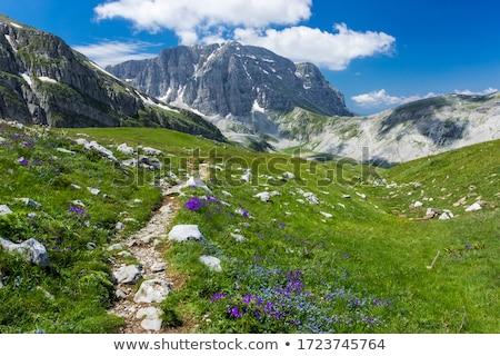 Trekking út hegyek Görögország fa erdő Stock fotó © mahout
