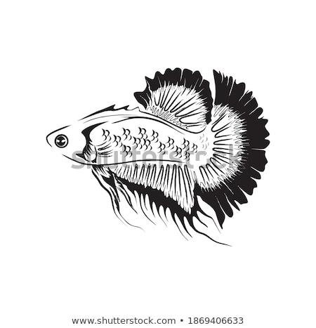 Clipart imagen peces arte naturaleza vida Foto stock © vectorworks51